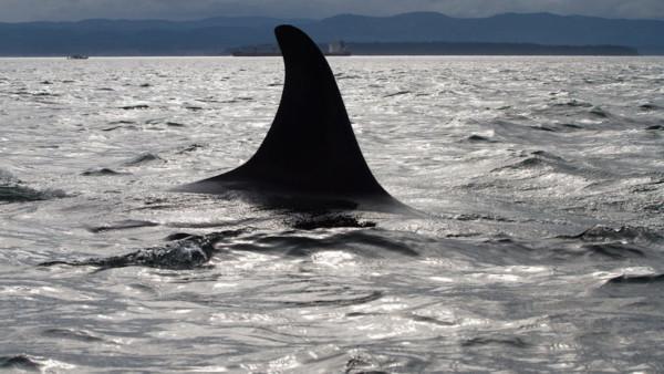 ORCAS-060